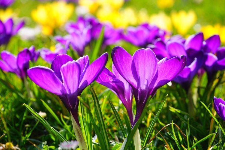 пролетно равноденствие